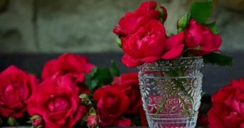 Comment choisir sa rose éternelle sous cloche